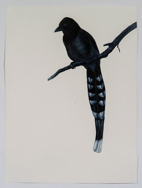 , 'Taiwan Blue Magpie (after Gould),' 2016, Sears-Peyton Gallery