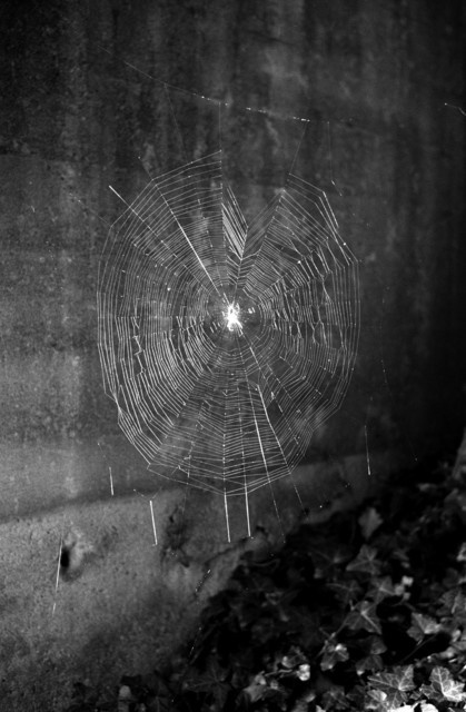 , 'Spinnennetz No.1,' 2004, Lange + Pult