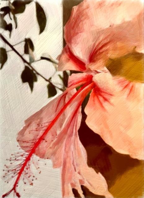 , 'Hibiscus,' 2017, Florida Fine Art