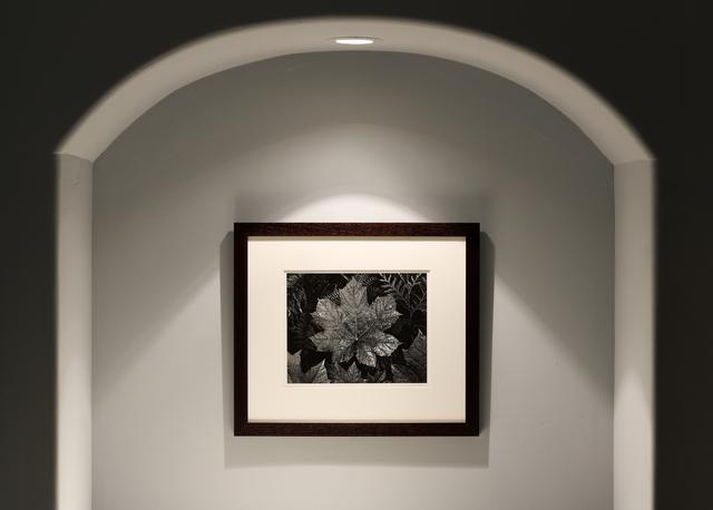 Ansel Adams, 'Leaves, Glacier NP', ca. 1942, Seagrave Gallery