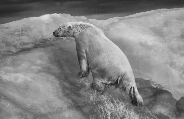 , 'Ice Climber,' , Paul Nicklen Gallery