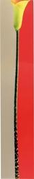 Single Bars Gray red yellow
