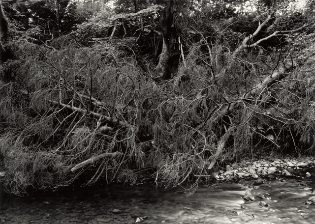 , 'Summer Morning, The River Annan, near Moffat, The Royal Borourgh of Dumfries and Galloway, Scotland,' 2014, Ingleby Gallery