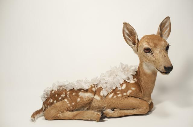 , 'Deer,' 2017, Galerie C.O.A
