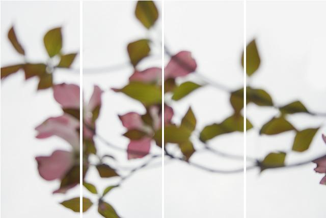 Jeri Eisenberg, 'Dogwood Pink', 2008, Carrie Haddad Gallery