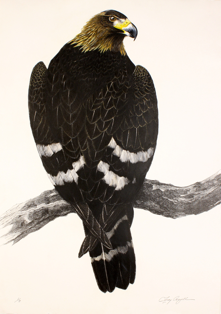 Tony Angell, 'Golden Eagle', 1988-2012, Print, Original lithograph with hand color, Foster/White Gallery