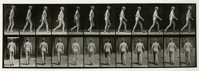 Eadweard Muybridge, 'Animal Locomotion #562', 1887, Joseph Bellows Gallery