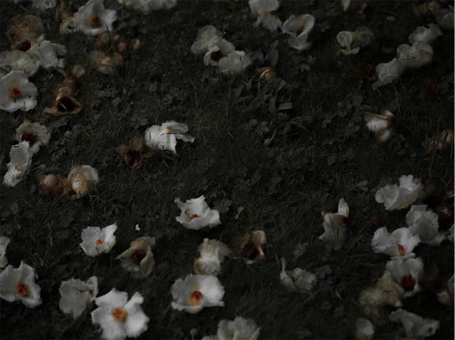Carolyn Carr, 'Ground Flowers no. 6', 2018, Jackson Fine Art
