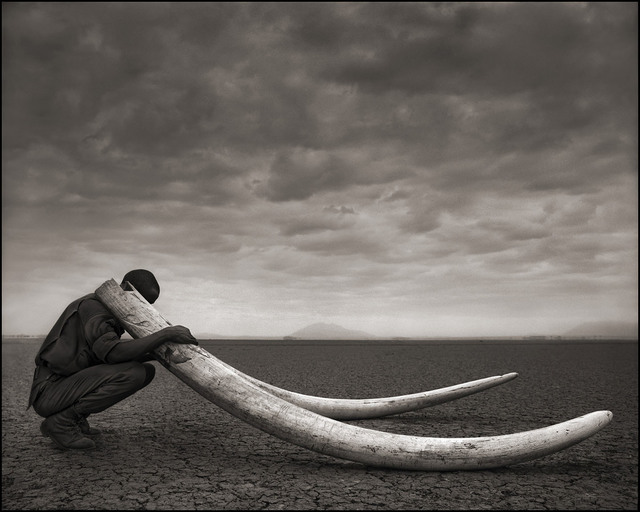 , 'Ranger with Tusks of Killed Elephant, Amboseli,' 2011, Edwynn Houk Gallery