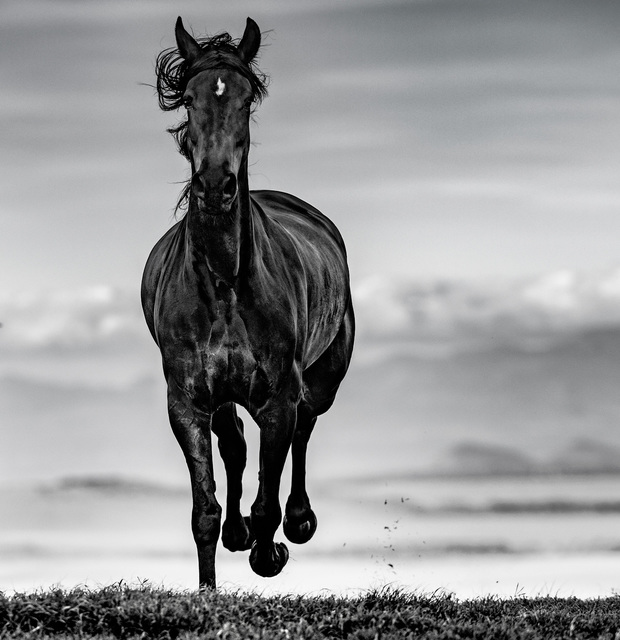 David Yarrow, 'Black Beauty', 2019, Photography, Archival Pigment Photograph, Holden Luntz Gallery