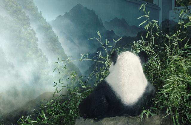 , 'Giant Panda in Den,' 2017, Osborne Samuel