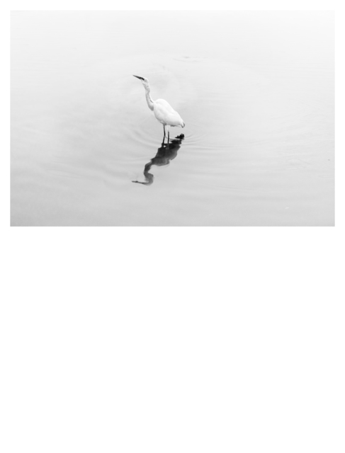 , 'Natural History (Egret),' 2018, Mizuma Art Gallery
