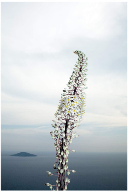 , 'Hydra,' , Galerie Kandlhofer