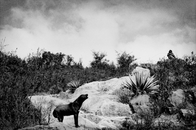 , 'A shepherd's dog in the hills above town. Santiago Mitlatongo, Mexico.,' 2011, Anastasia Photo