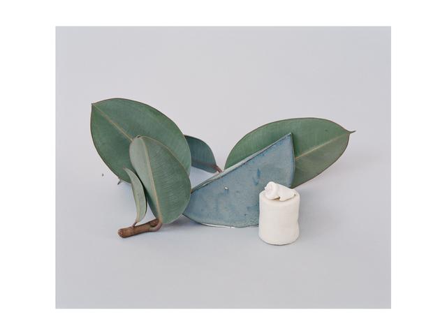 , 'Ficus elastica,' 2016, PARISIAN LAUNDRY
