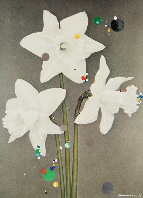 , 'No. 32 #2 White Trumpet Daffodil Beersheba, serie Bloemen,' 2016, Galeria Leme