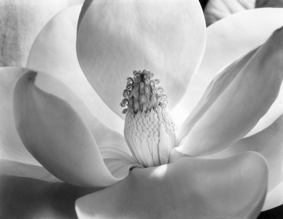 , 'Magnolia Blossom,' 1925, Photography West Gallery