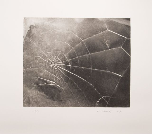 , 'Spider Web,' 2009, Zane Bennett Contemporary Art