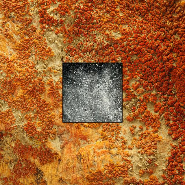Daniel Barsotti, 'Mom's Ashes on Lichen', 2015, MILL Contemporary