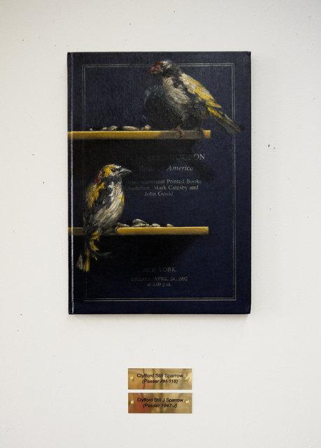 Clive Smith, 'Clyfford Still Sparrow (Passer PH-118)', 2015, Marc Straus