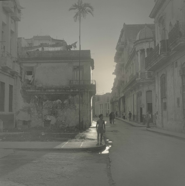, 'Palm Tree, Havana,' 2003, Nailya Alexander Gallery