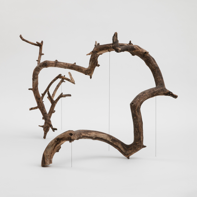 , 'Branch,' 2018, Foxy Production