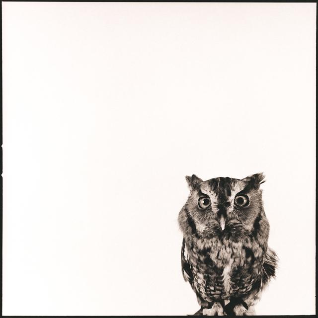Nine Francois, 'Owl V', Weston Gallery