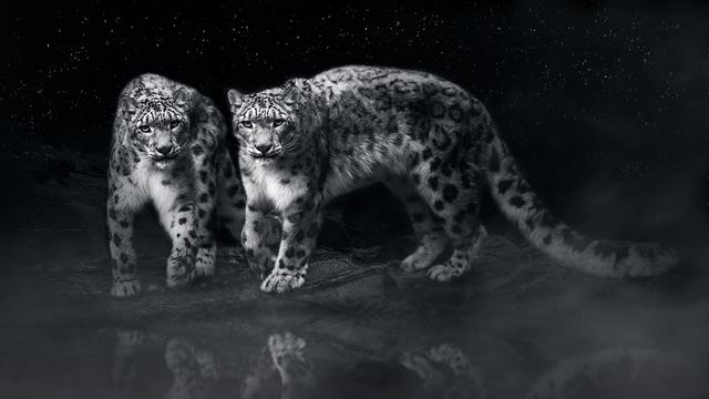 , 'Snow Leopard,' 2018, ARTE GLOBALE