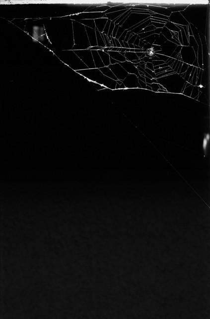, 'Spinnennetz No.10,' 2004, Lange + Pult