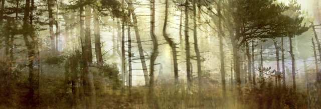 ", 'Pine Forest (from Series ""Constructed Landscapes""),' 2010/2011, Contemporary Works/Vintage Works"