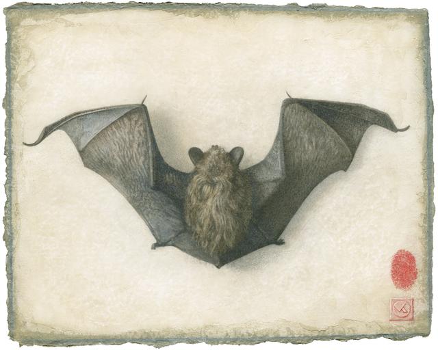 , 'Bat,' 2009, Didier Aaron