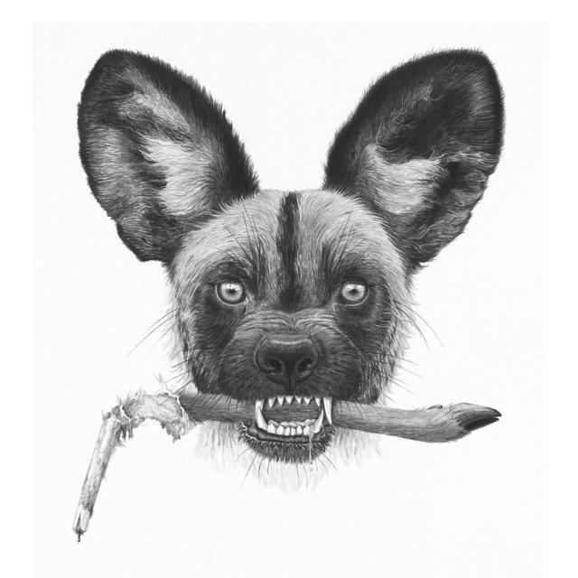 , 'African Wild Dog,' 2017, Parlor Gallery
