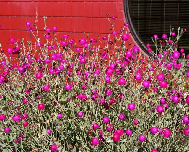 , 'Flowering plant,' 2012, Monte Clark Gallery