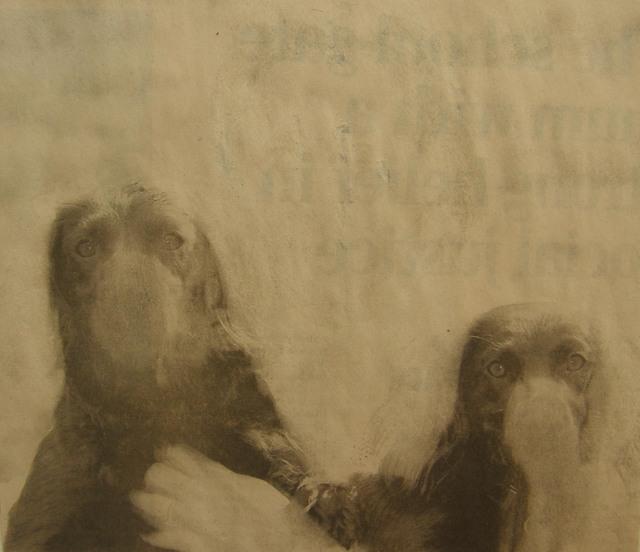 Matt Bryans, 'Untitled (Two Dogs)', 2005, Mireille Mosler Ltd.