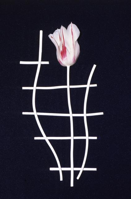 , 'Éludienne, Paris - 30 avril 1992 - juillet 1992,' 1992, Galerie Christophe Gaillard