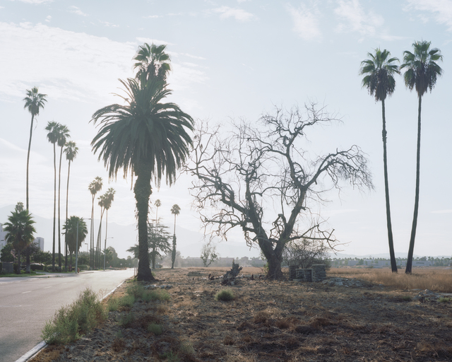 , 'Los Angeles Palms #11,' 2017, Samuel Maenhoudt Gallery