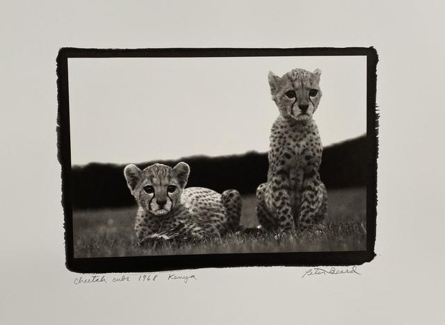 , 'Cheetah cubs, Kenya, 1968   ,' 1968, Michael Hoppen Gallery
