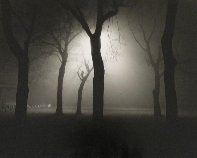 Alex Fradkin, 'Six Trees at Night: Chicago, IL', Chicago Art Source