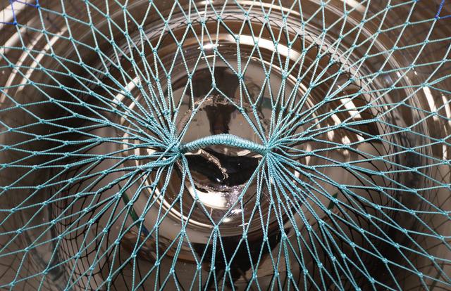 Carolina Caycedo, 'Poça ', 2020, Installation, Vidrio soplado y pintado artesanalmente, atarraya artesanal y pesos en plomo. / Hand-painted blown glass, artisanal fishing net and lead weights., Instituto de Visión