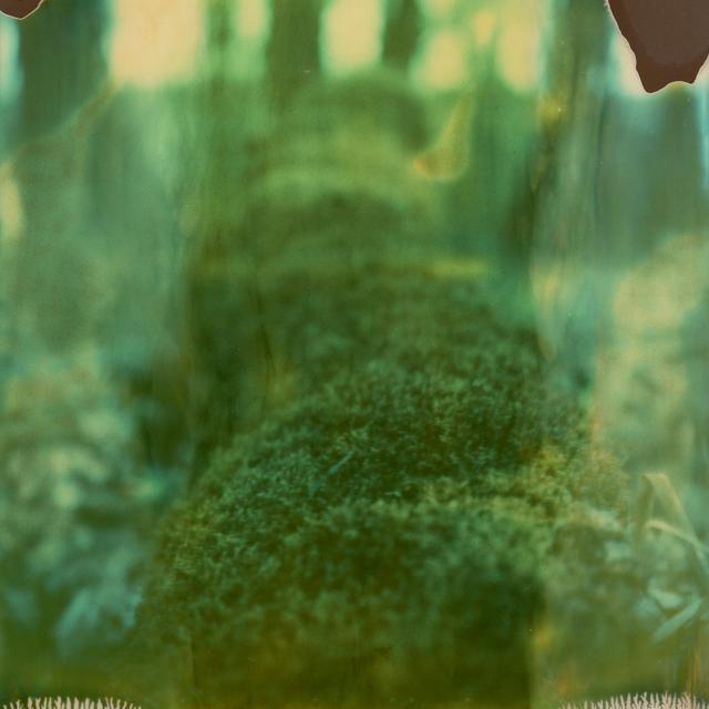 Julia Beyer, 'Moss', 2016, Instantdreams