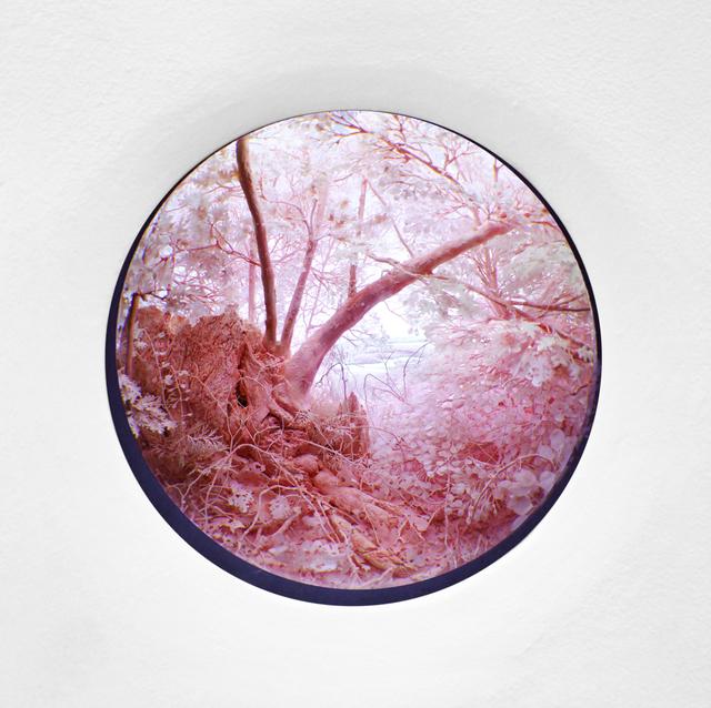 , 'Pink Forest,' 2015, Pierogi