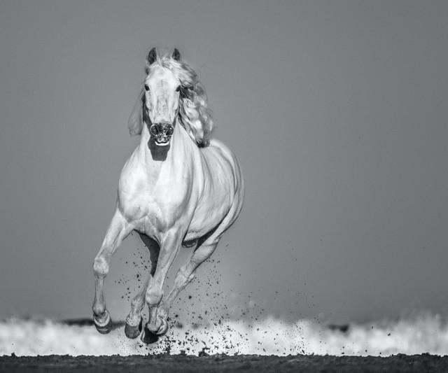 David Yarrow, 'Pegasus', 2020, Photography, Archival Pigment Print, Hilton Asmus