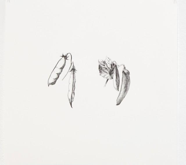 , 'Pysum Sativum 3,' 2016, Lucia Mendoza