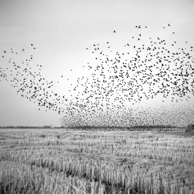 , 'Birds in Field, Mound Bayou, Mississippi,' 2012, Pictura Gallery