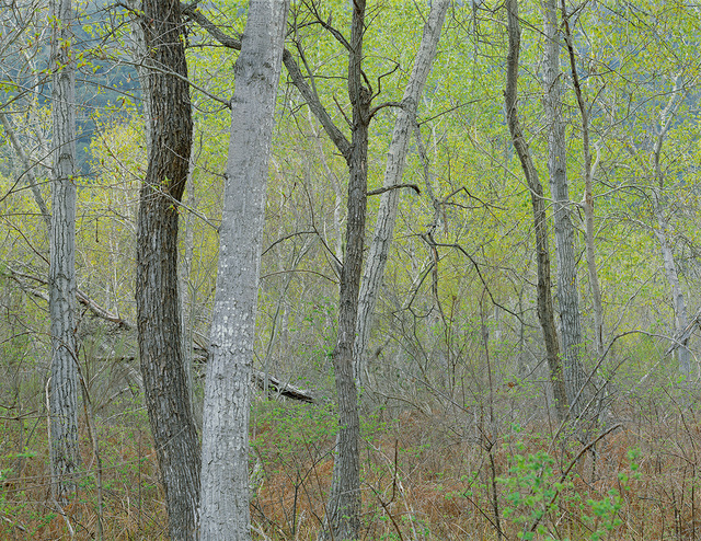 , 'Willows, Sycamores, Spring, Garland Park (Framed),' 2005, Estrada Fine Art