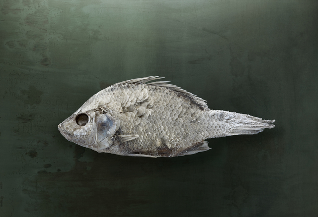 , 'Salton Sea Fish #1, Santa Fe, NM,' 2010, photo-eye Gallery