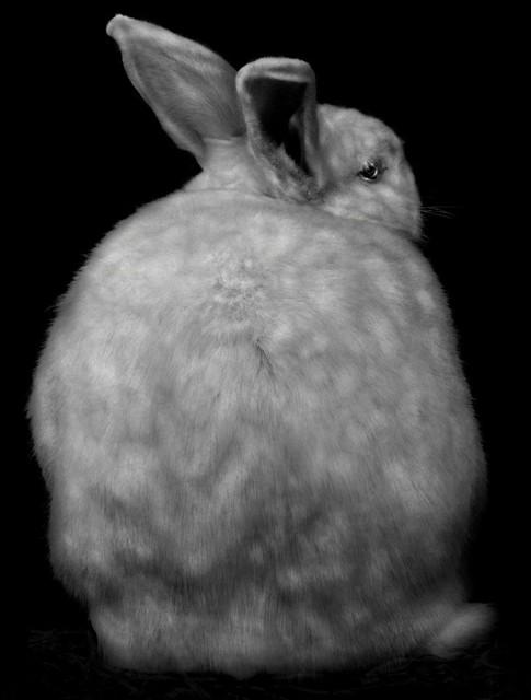 Elliot Ross, 'Animal (127)', 2009, Aperture Foundation