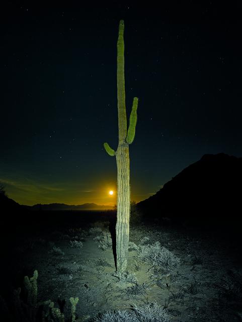 , 'Saguaro Lit by Headlamp with Moon,' 2016, Radius Books