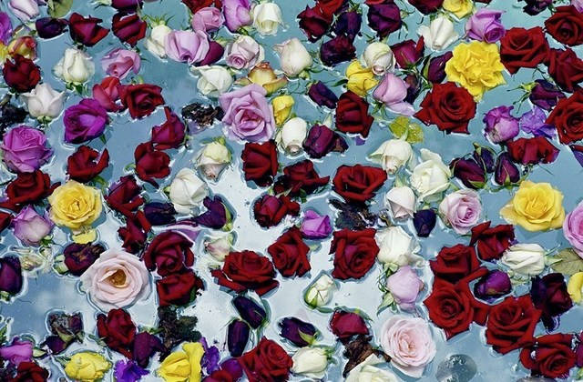 David Bailey, 'Flowers in Water', 2003, Kristy Stubbs Gallery