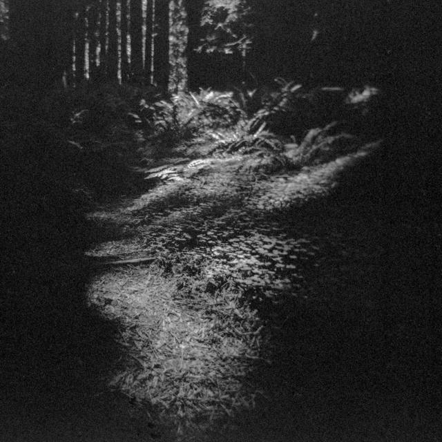 , 'Primal Wild 6,' 2014, Silo118